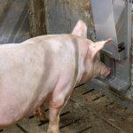 Initiative Tierwohl – neue Produkte im Sortiment!