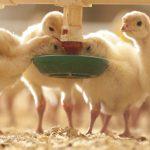 Maßnahmen gegen die Vogelgrippe